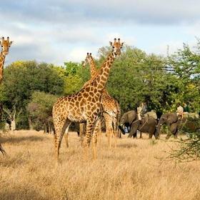 Go on safari in south africa - Bucket List Ideas