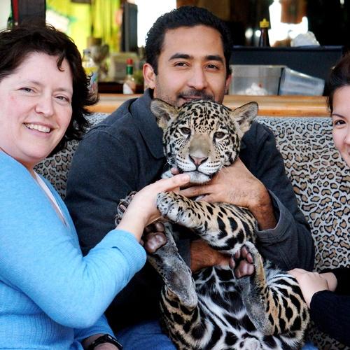 Cuddle exotic cute animals - Bucket List Ideas
