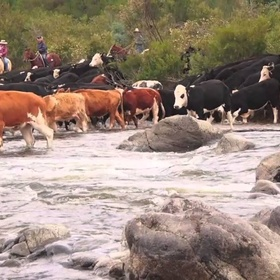 Go on a Cattle Muster/Drive - Bucket List Ideas