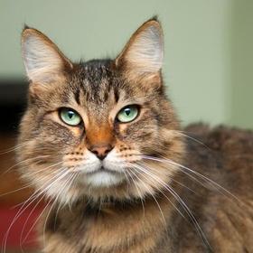 Get an OLDER CAT from a SHELTER - Bucket List Ideas