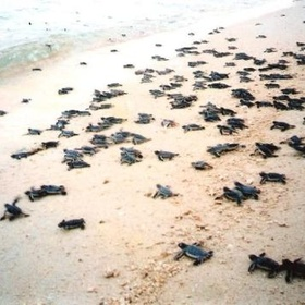 Watch turtles hatch and run for the ocean - Bucket List Ideas