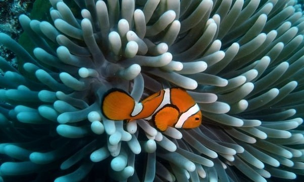 Go scuba diving in the Great Barrier Reef - Bucket List Ideas