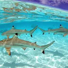 Touch a shark - Bucket List Ideas