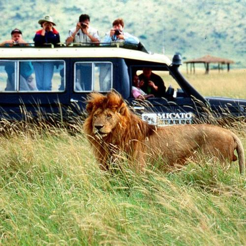 Go on a safari in africa - Bucket List Ideas
