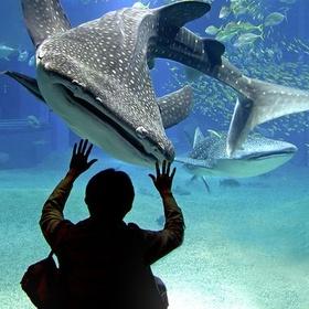 Visit One of the World's Best Aquariums Osaka Aquarium Kaiyūkan - Bucket List Ideas