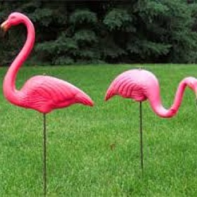 Own a Pink Flamingo for My Lawn - Bucket List Ideas