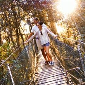 Walk a Tree-Top-Walk in Queenslands' rainforests - Bucket List Ideas