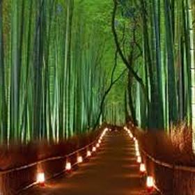 Stroll through sagano bamboo forest - Bucket List Ideas
