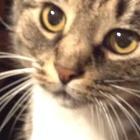 Camryn  Graffius's avatar image