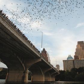 See the bats at dusk under a bridge in Austin, Texas - Bucket List Ideas