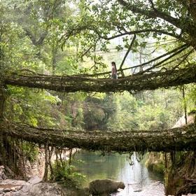 India - Living Root Bridges - Bucket List Ideas