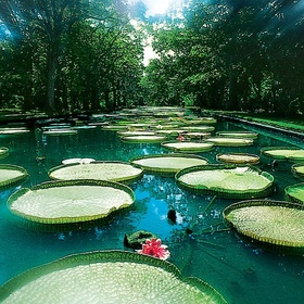 Go to the Pamplemousse Garden in Mauritius - Bucket List Ideas