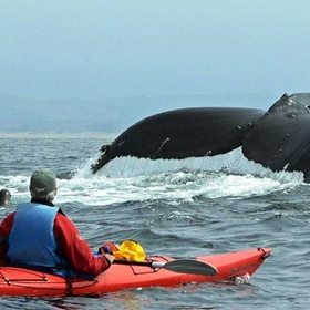 Kayak with Whales - Bucket List Ideas