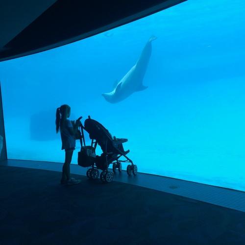 Visit Texas State Aquarium - Bucket List Ideas