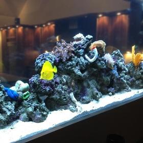 Create an Aquatic/Marine Enviornment - Bucket List Ideas