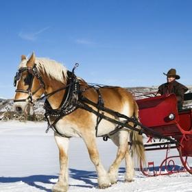 Go on a sleigh ride in the snow - Bucket List Ideas