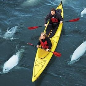 Kayak with Beluga Whales, Canada - Bucket List Ideas