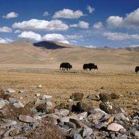 Visit Tibet - Bucket List Ideas