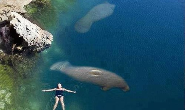 Swim with Manatees - Bucket List Ideas