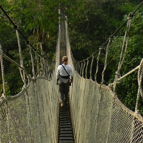 Go on a Rainforest Expedition - Bucket List Ideas