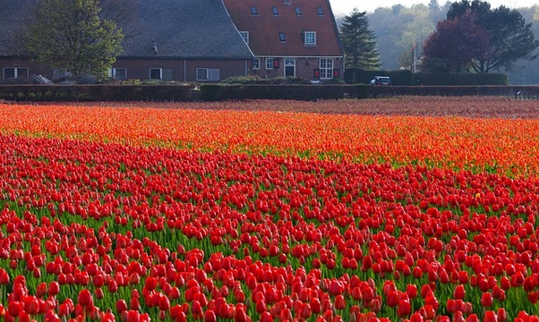 See Holland in bloom - Bucket List Ideas