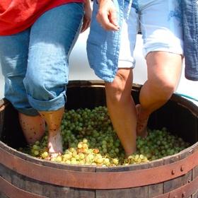 Stomp fruits in a big berrol - Bucket List Ideas