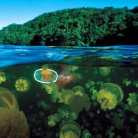 Swim in jellyfish lake :D - Bucket List Ideas