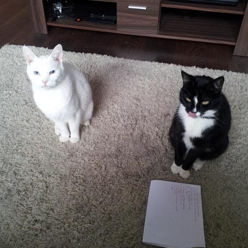 Own a cat - Bucket List Ideas
