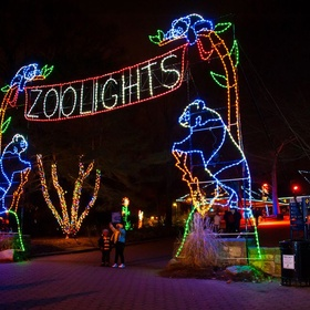 Christmas - See Zoo Lights With My Loved One(s) - Bucket List Ideas