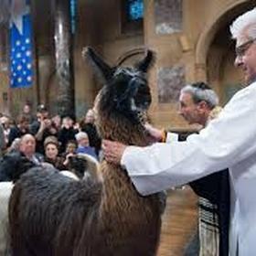 Witness a llama blessing - Bucket List Ideas