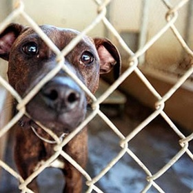 Rescue an animal from a shelter - Bucket List Ideas