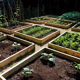Grow my own fruits/vegetables - Bucket List Ideas