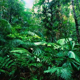 Visit a rain forest - Bucket List Ideas