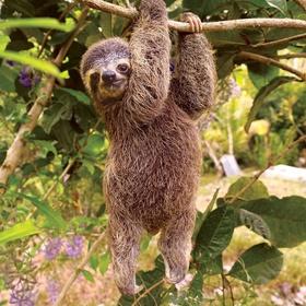 See (hold) a sloth - Bucket List Ideas