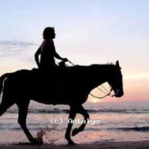 Ride a horse on the beach - Bucket List Ideas