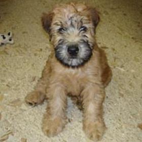 Adopt or rescue an animal - Bucket List Ideas
