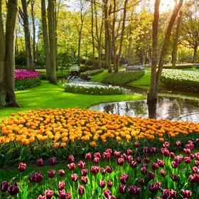 Visit Keukenhof gardens ~Netherlands - Bucket List Ideas