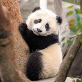 Cuddle with a baby Panda - Bucket List Ideas