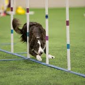 Take the Kids to an AKC Agility Trial - Bucket List Ideas