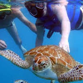 Swim with the turtles - Bucket List Ideas