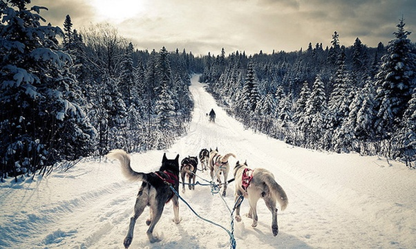 Go Dogsledding - Bucket List Ideas