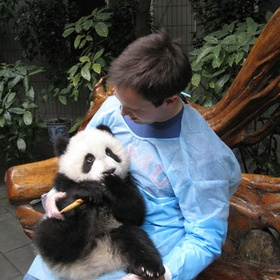 Pet a Panda Bear - Bucket List Ideas