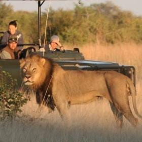 Make a safari - Bucket List Ideas