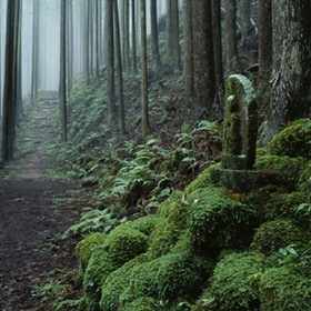 Walk the Kumano Kodo Pilgrimage Trail - Bucket List Ideas