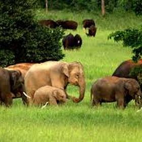 Visit the Elephant National Park in Thailand - Bucket List Ideas