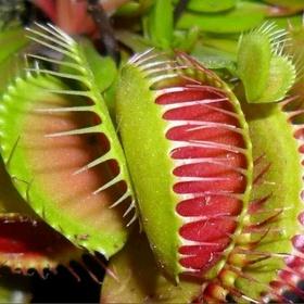 Own a venus flytrap - Bucket List Ideas
