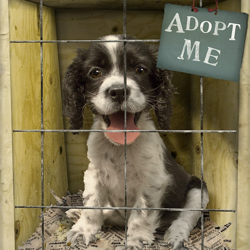 Adopt A Dog - Bucket List Ideas