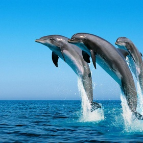 See dolphins swimming - Bucket List Ideas