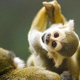 Close-up Encounters - Squirrel Monkey - Bucket List Ideas
