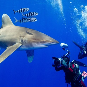 Go Swimming with Sharks!! - Bucket List Ideas